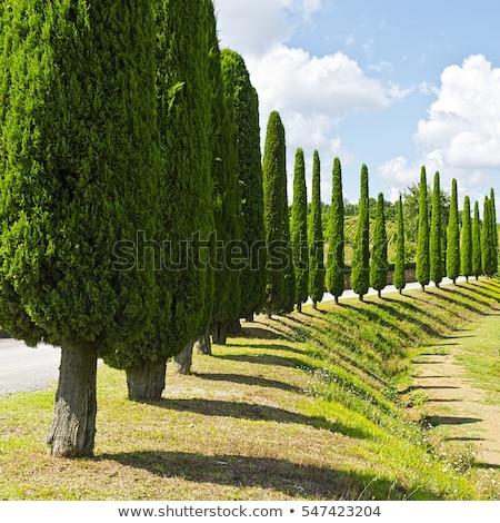 árvores terreno estrada toscana rural manhã Foto stock © Taiga