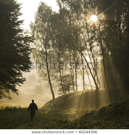 Zonnestralen wandelen verlagen rivier Washington bos Stockfoto © davidgn