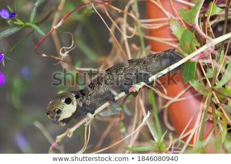 mechanical moth Stock photo © blackmoon979