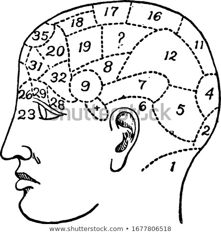 Old Phrenology Illustration stock photo © 3mc