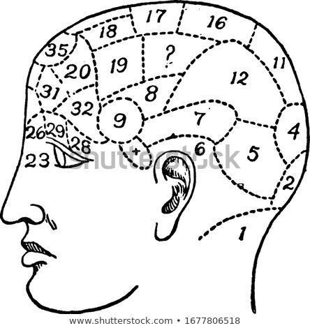 Stockfoto: Old Phrenology Illustration