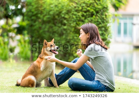 A young shiba inu playing in the park. Stock photo © user_11224430