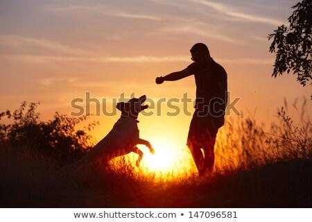 Foto stock: Homem · cão · pôr · do · sol · ilustração · silhueta · treinamento