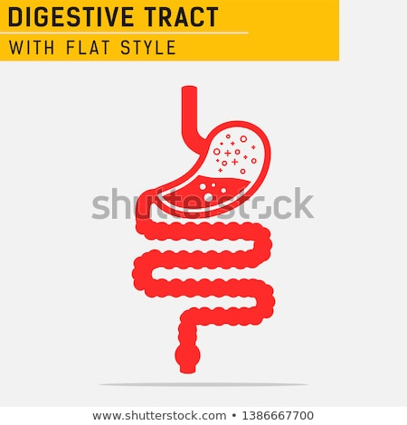 Gastrointestinal tract icon Stock photo © Tefi