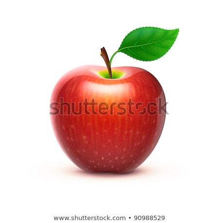 Piros alma levél ikon rajz stílus fehér Stock fotó © ylivdesign
