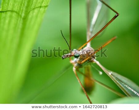 Büyük sivrisinek makro oturma pencere yağmur Stok fotoğraf © FOTOYOU