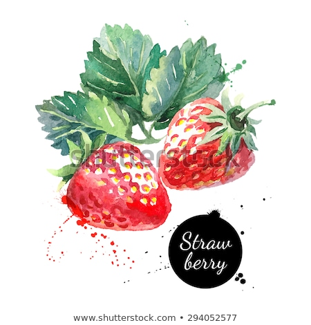 watercolor illustration of strawberry stock photo © sonya_illustrations