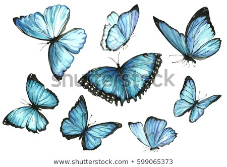 set of butterflies for tattoo stock photo © mcherevan
