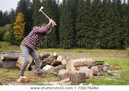 Ax woodcutter working tool Stock photo © studiostoks