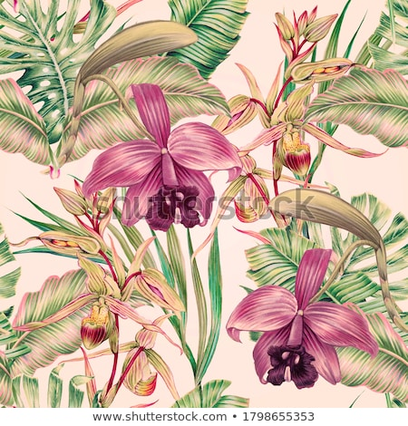 Zomer orchidee patroon groep tropische orchideeën Stockfoto © Soleil