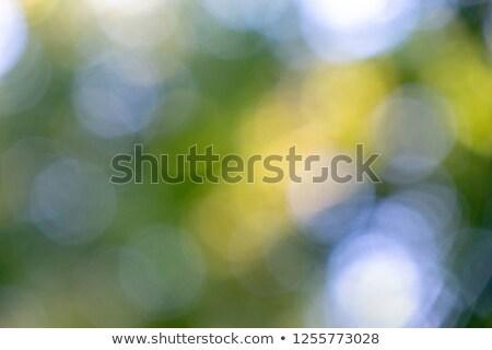 streszczenie · miękkie · jasnoniebieski · zamazany · circles · mały - zdjęcia stock © artjazz