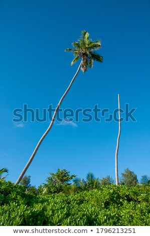 Green palm leaf on a blue background with copy space. Natural la Stock photo © artjazz