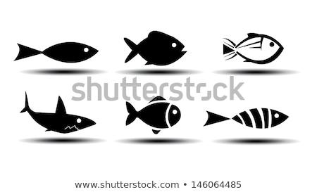 aquarium set fish silhouette vector illustration stock photo © robuart