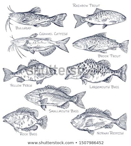poissons · icône · eau · animaux · pas - photo stock © robuart