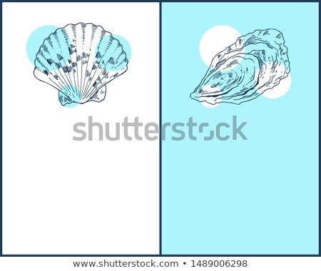 Huître marines créatures affiche fruits de mer croquis Photo stock © robuart