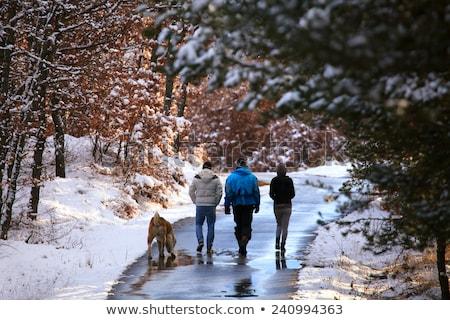 Tourist walks in the winter forest Stock photo © Kotenko