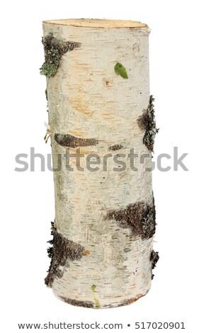 old dead birch tree trunk in forest stock photo © juhku