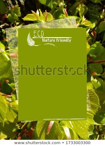 Bio naturales alimentos vacío banner hojas Foto stock © robuart