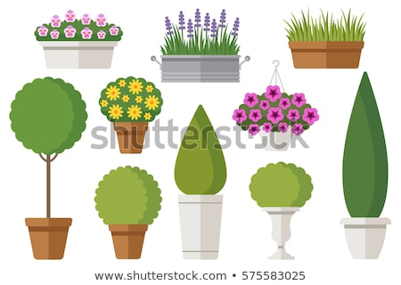Outdoor Plant in Pot, Exterior Design Decoration Stock photo © robuart
