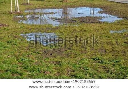poor executed drainage Stock photo © taviphoto