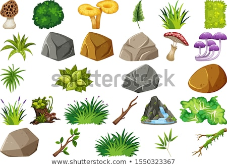 Collection of outdoor nature themed objects and plant elements Stock photo © bluering