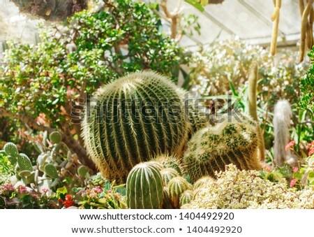 Kaktusz üvegház kertek Toronto Ontario zöld Stock fotó © bmonteny