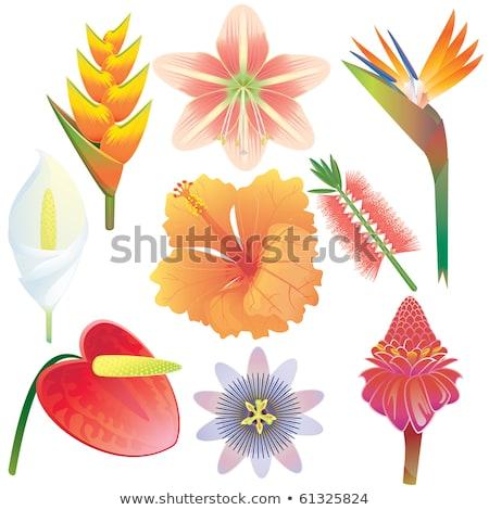 Vogel Paradies Blumen Busch Illustration Blume Stock foto © colematt
