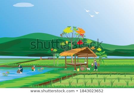 Dorp vijver klein voorjaar water lelies Stockfoto © vavlt