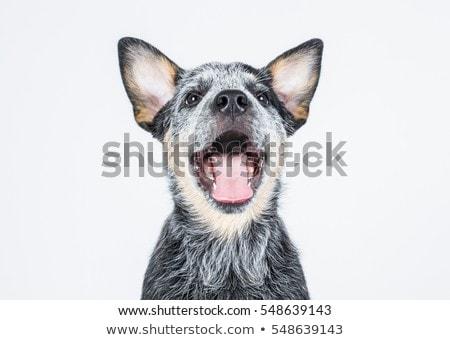 Uśmiechnięty lekarz weterynarii cute psa biały kobieta Zdjęcia stock © wavebreak_media