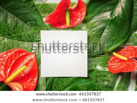Greeting card with blooming houseplant and blank paper sheet. Stock photo © artjazz