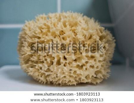 морем подробность форма желтый цвета ванны Сток-фото © lunamarina