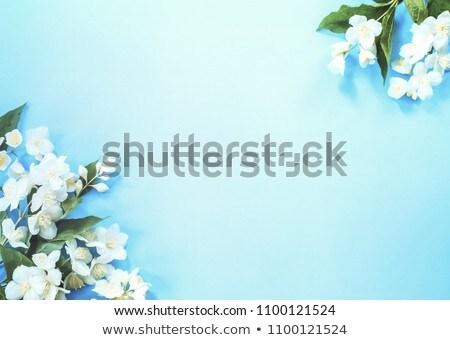 beautiful jasmine blossom stock photo © julietphotography