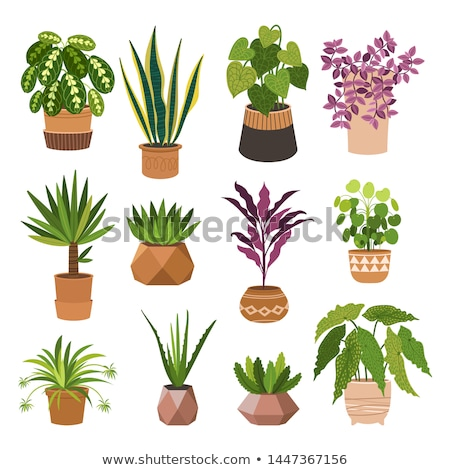 Natural Decoration Green Houseplant in Pot Vector Stock photo © robuart