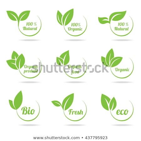 Vejetaryen ürün yeşil yaprakları etiket dizayn Stok fotoğraf © SArts