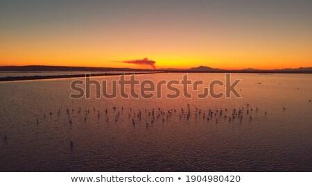 wild flamingos traveling mediterranean salinas in summer Stock photo © juniart