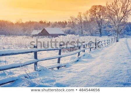 Ağaç yalnız kış manzara don Stok fotoğraf © tlorna