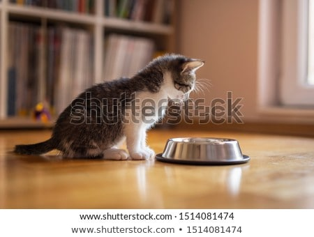 Little cat Stock photo © adrenalina