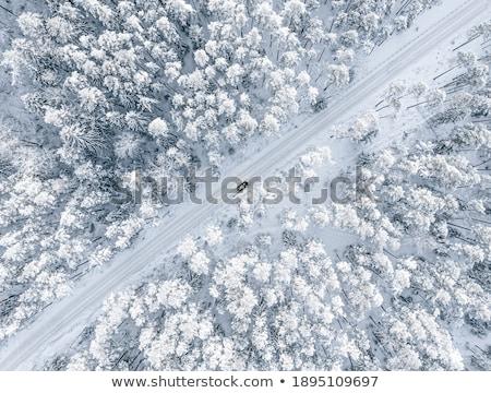 fresche · intatto · neve · inverno · terra · bianco - foto d'archivio © sailorr