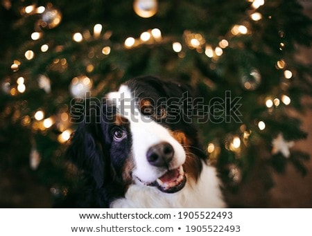 Santa Claus in the kennel Stock photo © adrenalina