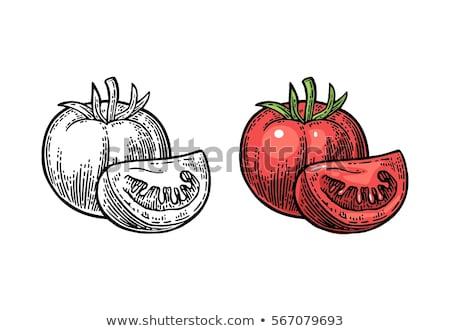 Color Sketch tomato Stock photo © netkov1