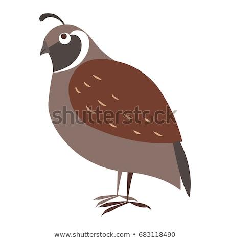 Bonitinho pássaro desenho animado vetor adesivo engraçado Foto stock © robuart
