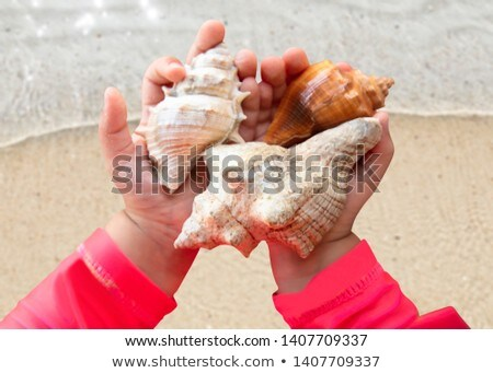 Toddler Girl Holding Conch Seashells In Hand Stock photo © AndreyPopov