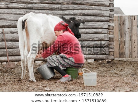 a woman milker cow bucket milk. agriculture village life Stock photo © studiostoks