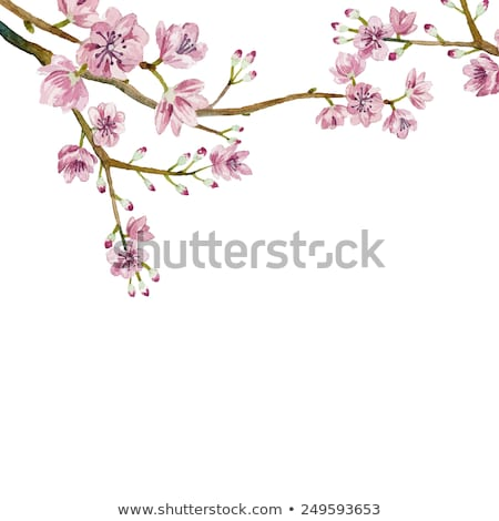 flowering trees in the spring. cherry berry Stock photo © ruslanshramko