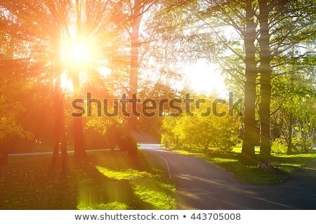 Walkway on sunny day Stock photo © Nejron
