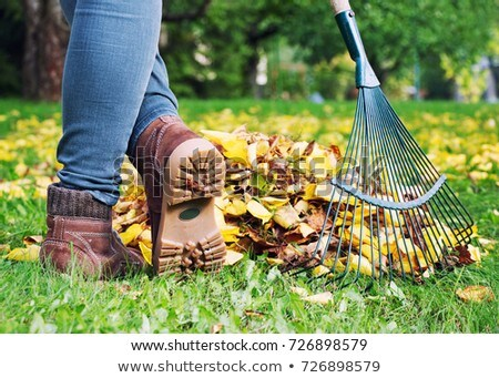 Woman raking leaves in a yard Stock photo © photography33