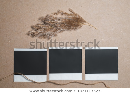 Photo stock: Wood Frame For Photo On The Abstract Background With Grass