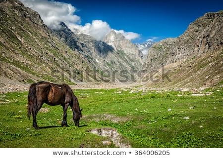 Lovak hegyek India Himalája fű ló Stock fotó © dmitry_rukhlenko