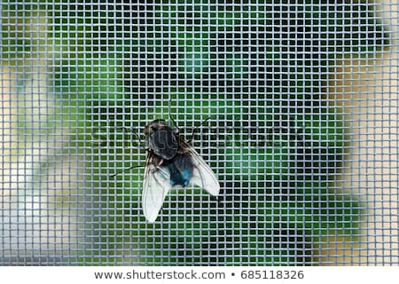 Nasty Housefly in a Window Stock photo © aetb