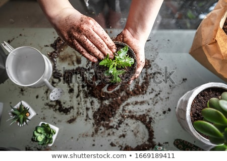 588165bahçe bahar çim doğa manzara arka plan